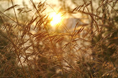 Grass. Dry grass with sun light Stock Image