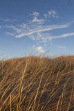 Grass on dues. Dry grass on sand dunes at the beach Royalty Free Stock Image