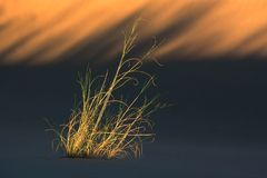 Grass and dune stock photography
