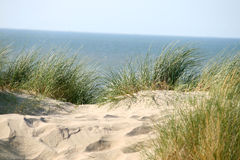 Grass on dune Royalty Free Stock Photos