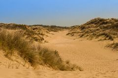 Grass dune in a landscape Royalty Free Stock Photography