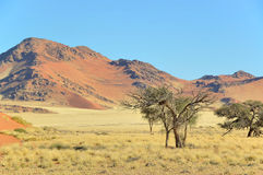 Grass, dune and mountain landscape near Sossusvlei, Stock Image