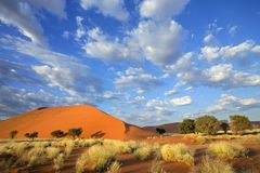 Grass, dune and sky, Nambia Stock Images