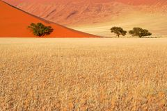 Grass, dune and trees, Sossusvlei, Namibia. Landscape with desert grasses, red sand dune and African Acacia trees, Sossusvlei, Namibia, southern Africa Royalty Free Stock Image