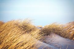 Grass in the dunes of Denmark stock photo