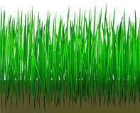 Grass with earth Stock Photo