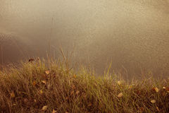 Grass on the edge of the cliff Stock Photography