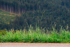 Grass on the edge of road Royalty Free Stock Photography