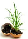 Grass in egg Stock Image