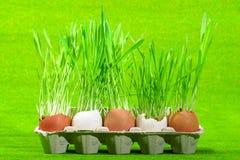 Grass from eggs Stock Photos