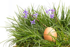 Grass and eggs on  white background Stock Photo