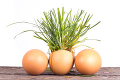 Grass and eggs on  white background Stock Photos
