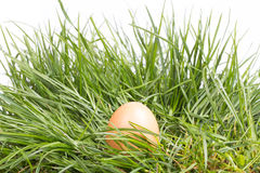 Grass and eggs on  white background Royalty Free Stock Images