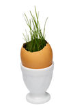 Grass in the eggshell Stock Images
