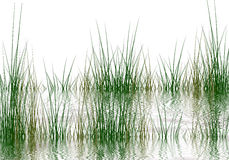 Grass elements Royalty Free Stock Images