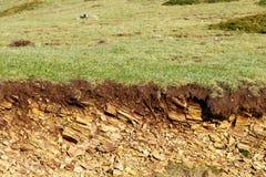 Grass erosion Stock Image