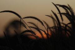 Grass evening Royalty Free Stock Photography