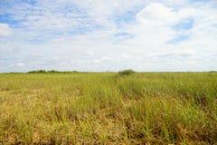 Grassland in everglades national park. Grass in everglades national park, Florida, USA stock photo