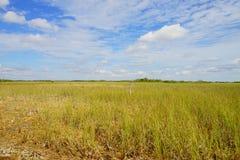 Grassland in everglades national park. Grass in everglades national park, Florida, USA stock photos