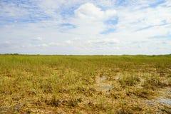 Grassland in everglades national park. Grass in everglades national park, Florida, USA royalty free stock photos