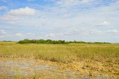 Grassland in everglades national park. Grass in everglades national park, Florida, USA royalty free stock image