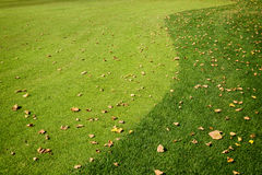 Grass and fall leaves. Fall colored leaves on the green grass of a golf field. Abstract background royalty free stock photography