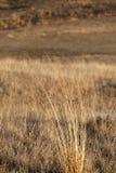 Grass in fall season Royalty Free Stock Image
