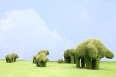 Grass Family elephant Stock Photography