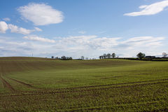 Grass farm. In summer season Royalty Free Stock Images