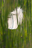 Grass and feather Stock Images