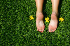 Grass Feet. Female feet on grass with sunny yellow daisies royalty free stock images