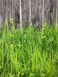 Grass and fence Royalty Free Stock Photo