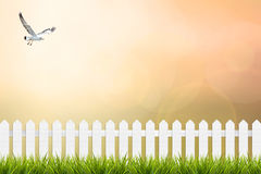 Grass and fence under sunset sky blurred background Stock Photos