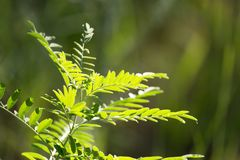 Grass fern in nature. In the park in nature Stock Photo
