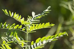 Grass fern in nature. In the park in nature Stock Images