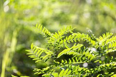 Grass fern in nature. In the park in nature Royalty Free Stock Photo