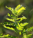 Grass fern in nature. In the park in nature Stock Photography