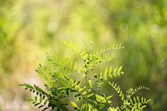 Grass fern in nature. In the park in nature Royalty Free Stock Photography