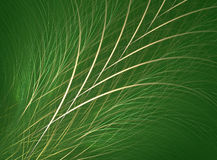 Grass/Fescue Royalty Free Stock Photography