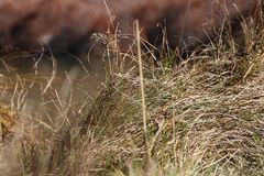 Grass. In a field Royalty Free Stock Photos