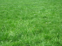 Grass field. Green grass field Stock Photography
