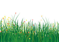 Grass field. In white background eps Stock Photography