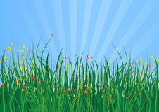 Grass field. In blue background eps Stock Images