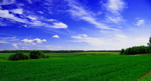 Grass field. Green field under grass crops and clarity sky Royalty Free Stock Images
