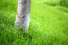 Grass Field. With tree trunk Stock Image