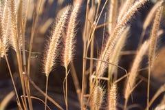 Grass Field Stock Photo