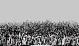 Grass field. Hand-drawn illustration vector illustration