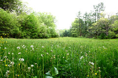 Grass field. Grass in the Maudslay State Park, MA Royalty Free Stock Photography