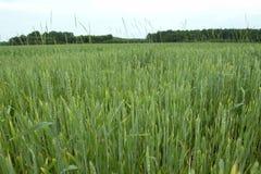 Grass field 2 Stock Image