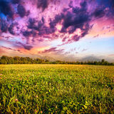 Grass field. View of grass field, trees and mountains at dramatic purple sky with clouds background Royalty Free Stock Images